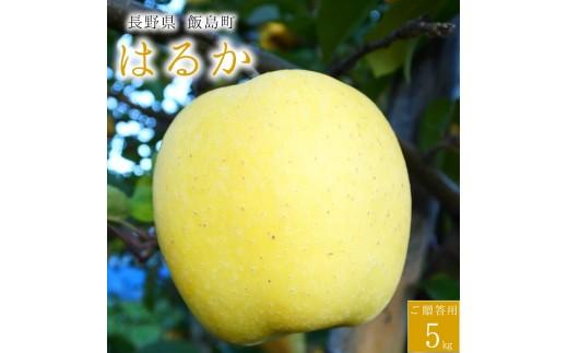 40【桃沢晴香園】 はるか (りんご 5kg)