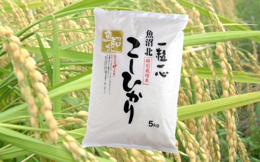 特別栽培米魚沼産コシヒカリ5kg