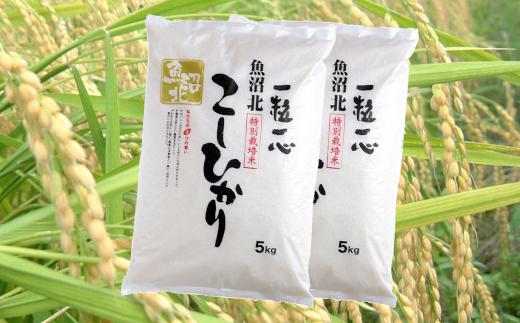 日本一のブランド米「魚沼産コシヒカリ」特別栽培米