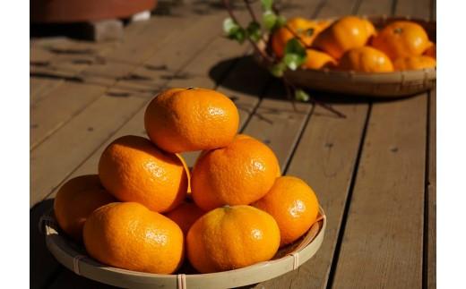 7-02 【数量限定】黒田農園のコクある甘さのひょっとこみかん(2L) 5kg