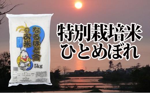 [№5685-1317]秋田県産ひとめぼれ減農薬米10kg(5kg×2・数量限定)