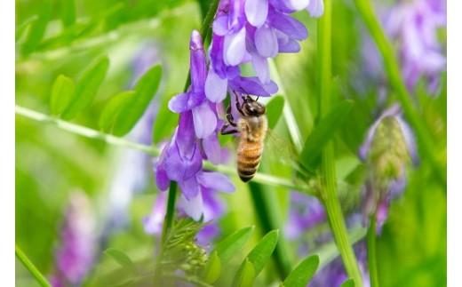 フェアリーベッチとミツバチ