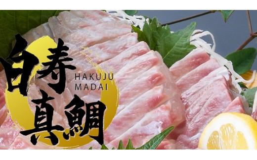 【B109】愛媛の有名店「寿司和泉屋」若大将が捌いた「白寿真鯛」と秘伝のタレ