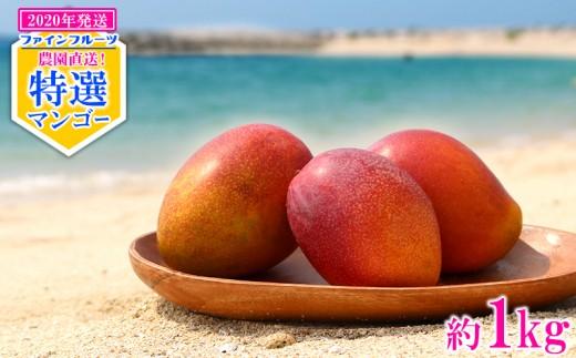 【2020年発送】農園直送!ファインフルーツおおぎみ特選マンゴー約1kg