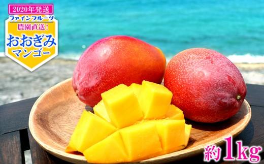 【2020年発送】農園直送!ファインフルーツおおぎみマンゴー【約1kg】