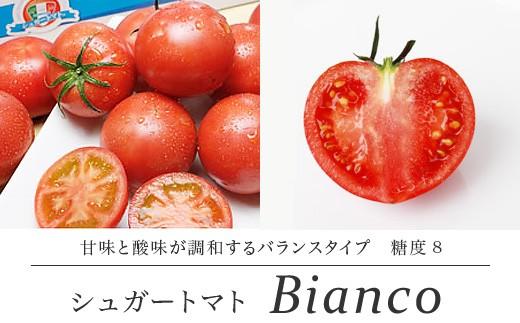 <先行受付>シュガートマト ビアンコ08(糖度8度以上) 1kg 高糖度 フルーツトマト【1021437】