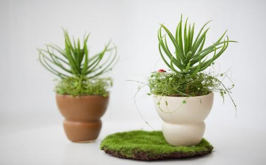 【空気をきれいにするアートフラワー】 観葉植物 小