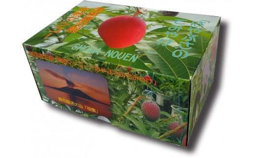 【A15002】【先行予約】肝付町産 完熟マンゴー ファミリーセット