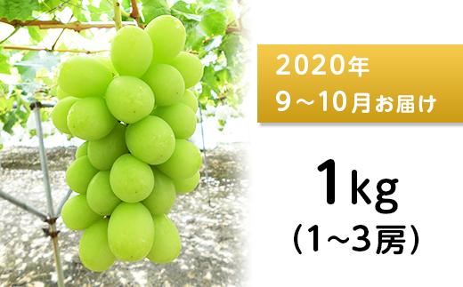 J0514シャインマスカット1kg【2020年9月以降出荷分】(矢島農園)