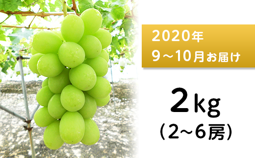 J0515シャインマスカット2kg【2020年9月以降出荷分】(矢島農園)