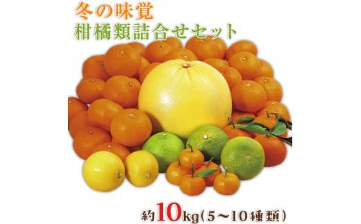 冬の味覚柑橘詰め合わせセット約10kg《12月中旬-3月末頃より順次出荷》道の駅竜北