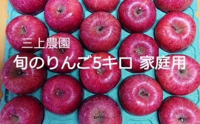 百年木の香 三上農園 旬のりんご 5キロ 家庭用