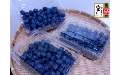 R003 愛媛県産ブルーベリー(1㎏)【65pt】