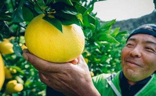 吉岡農園のすくも文旦5kg家庭用