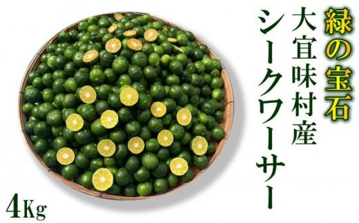 青切りシークワーサー《4Kg》【大宜味村 緑の宝石】