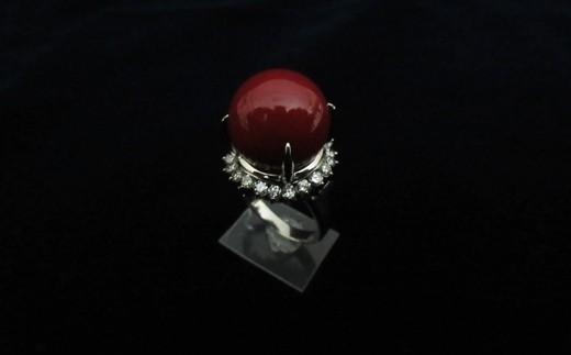 血赤珊瑚丸玉プラチナリングC