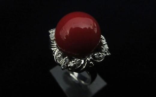 血赤珊瑚丸玉プラチナリングA