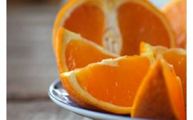 ■ご家庭用清見オレンジ[2021年3月~発送]