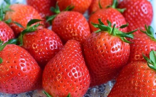 【4月 やよい姫】大粒で果肉がしかっりとし、甘さと酸味のバランスが優れたいちごです。