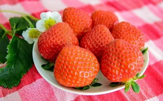 【7月 すずあかね】完熟で大粒のすずあかねは甘さと酸味のバランスが最高です。