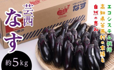 エコシステム栽培 芸西ナス 約5kg