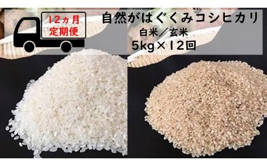 【12ヶ月定期便】自然がはぐくむお米 コシヒカリ 5kg(白米/玄米)