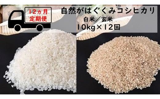 【12ヶ月定期便】自然がはぐくむお米 コシヒカリ 10kg(白米/玄米)