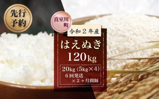 令和2年産米先行予約 真室川町産はえぬき120kg 年間定期便(20kg×2か月間隔で6回お届け)