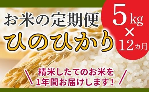 【全12回】鹿児島県産米ひのひかり5kg定期便 013-06
