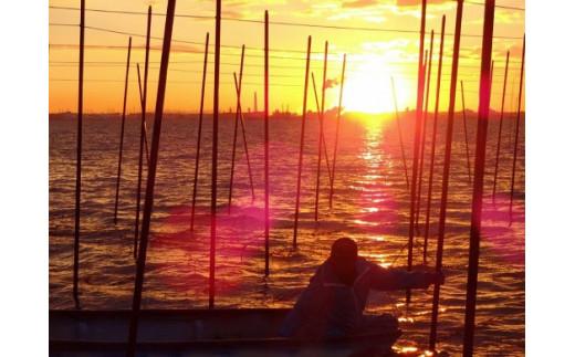 伊曽島漁業協同組合海苔漁