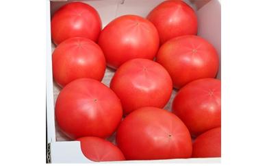 [№5672-0332]甘熟トマト『白岡の太陽』約2kg