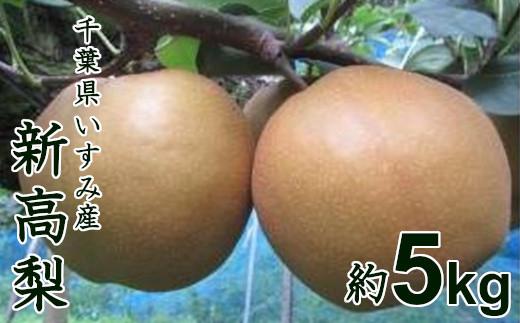 【数量限定】香りがよく上品な甘さ♪千葉県いすみ市の新高梨5kg A620