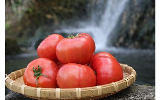【先行受付】『喜界島トマト』バガス醗酵有機肥料使用栽培 2kg(10~14玉入り)