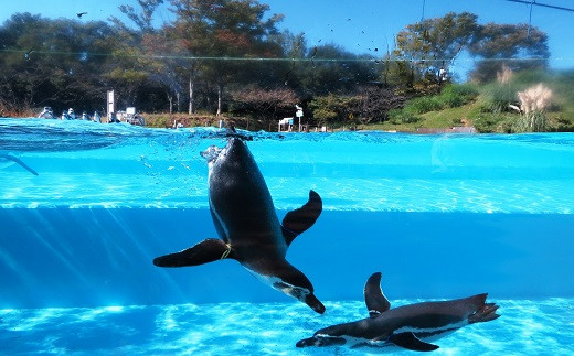 B3 こども動物自然公園優待券【年間パスポート引換券大人1名、小人1名】