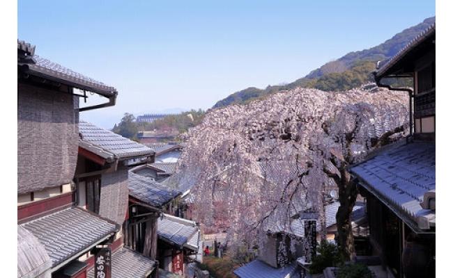 産寧坂の桜
