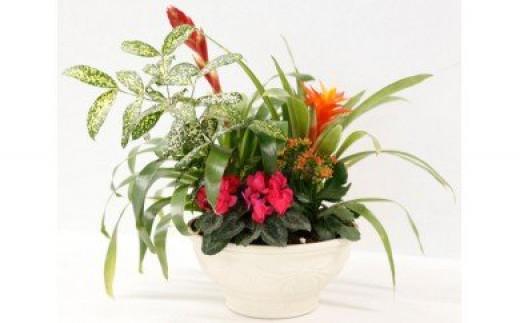 【2602-0098】季節の観葉植物・花寄せ植え