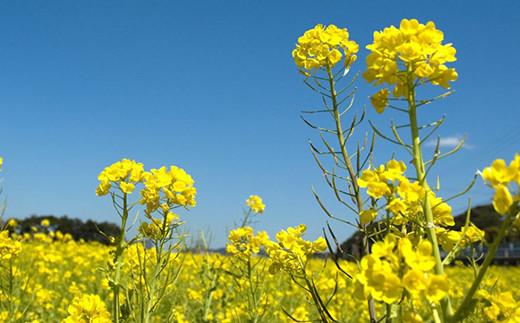 館山の見どころ:花のまち