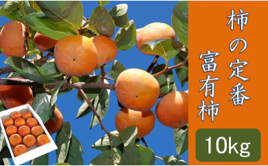 柿の定番「富有柿」約10kg