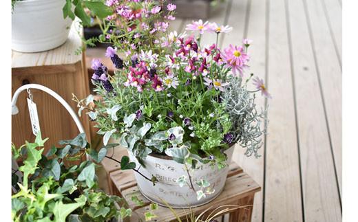 季節の寄せ植え<風の丘ガーデン> 31-SKG01