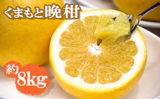Y02-17  初夏の味覚 くまもと晩柑(ばんかん)  8kg