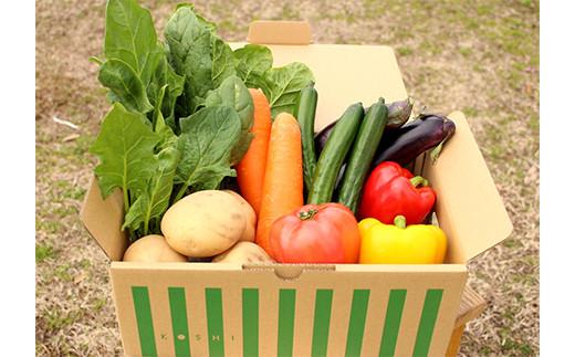 熊本県 合志の旬の お野菜 定期便 年10回 コース
