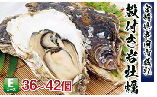 《数量限定》濃厚な味わい【串間産殻付 岩牡蠣(加熱用)】36~42個 L-E2