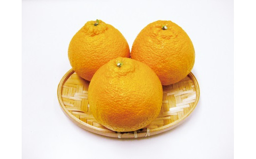 「季節のフルーツ」しらぬひ&せとか 計約10kg(3月発送)