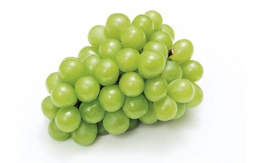 「季節のフルーツ」マスカット・オブ・アレキサンドリア 約1.8kg(8~9月発送)