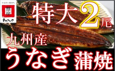FY02-13 九州産うなぎ蒲焼特大2尾(1尾あたり200~235g)