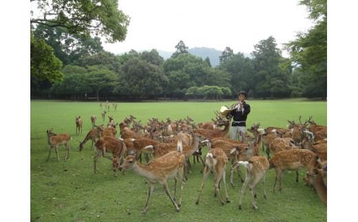 T-31 古都奈良の風物詩「鹿寄せ」貸し切りチケット