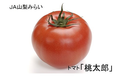 A1503完熟トマト!桃太郎!やまなし富士川町産平林トマト約4.0㎏【2020年発送分】