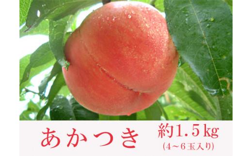 No.0130 もも(あかつき)(1.5)