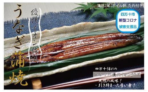 19-006.四万十川優化イオンうなぎ蒲焼2尾(ボイル肝、たれ付き)