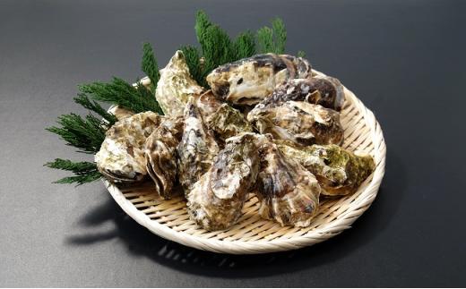 [№5742-0841]【先行予約】海のミルクサロマ湖産殻付2年物カキ貝 4kg (25~30個入)【カキナイフ付】